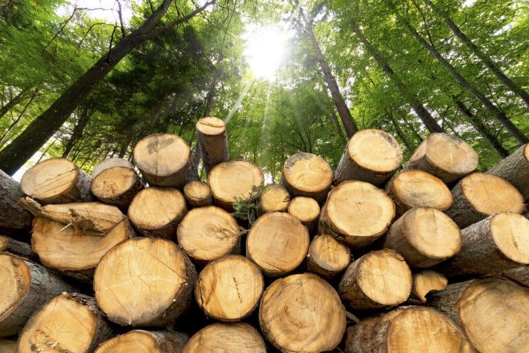 Stabel med tømmerstokker i skogen.